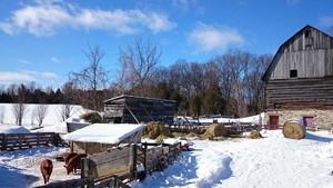 Yellowmoon Farm & Forest